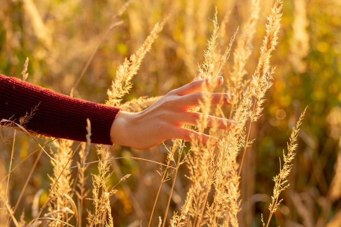 hand in dry grass