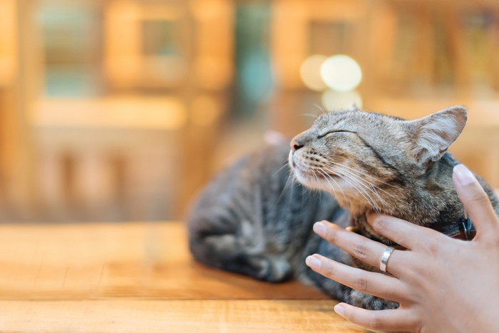 Close up Woman hand stroking brown cat